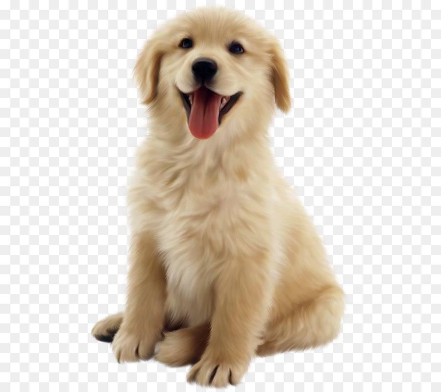 Descarga gratuita de Golden Retriever, Cachorro, Gato imágenes PNG