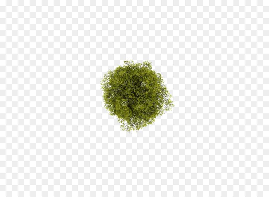 Descarga gratuita de árbol, Planta, Descargar Imágen de Png