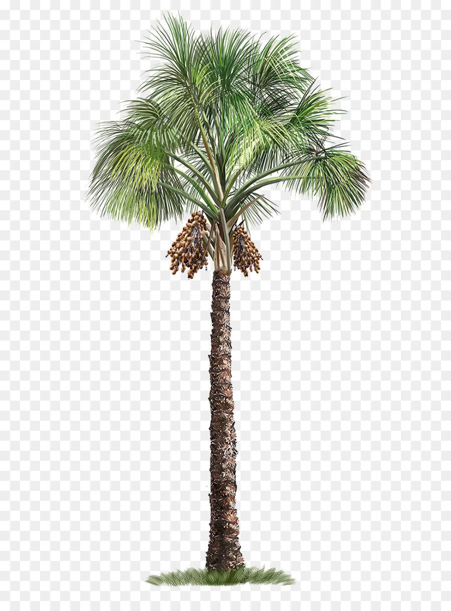 Descarga gratuita de Arecaceae, árbol, Mauritia Flexuosa imágenes PNG