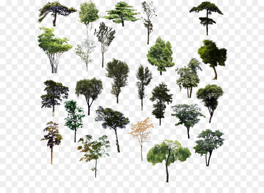 Descarga gratuita de árbol, Planta, Arbusto imágenes PNG