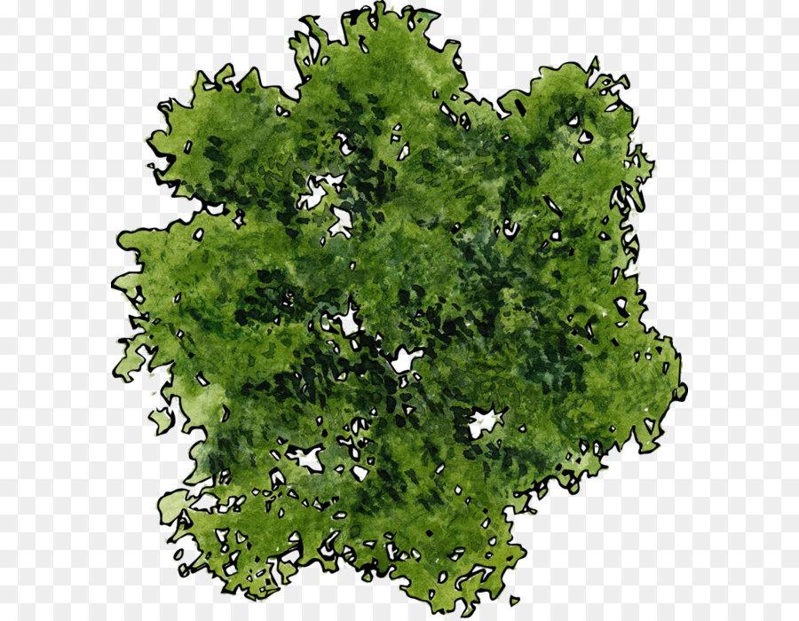 Descarga gratuita de árbol, La Parte Superior Del árbol, Planta imágenes PNG