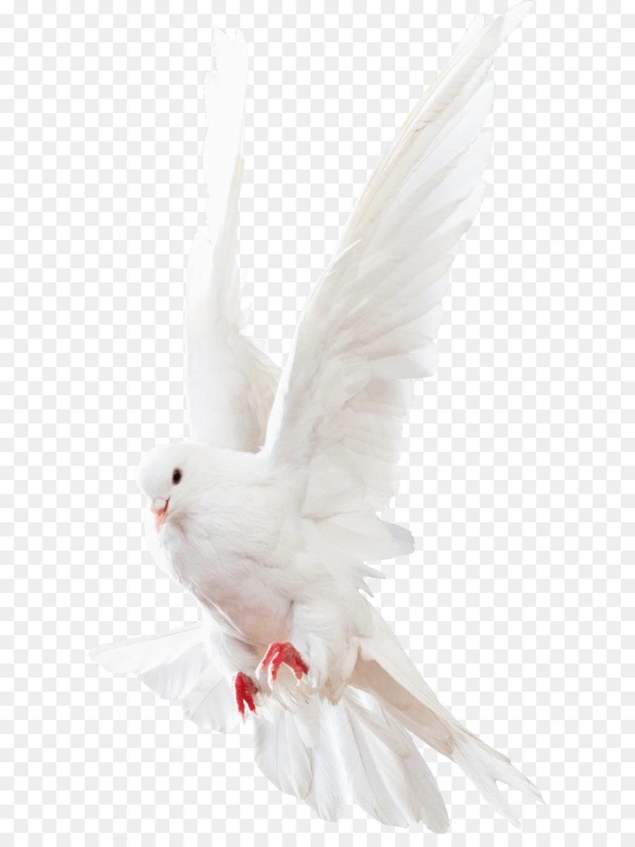Descarga gratuita de Columbinae, Aves, Descargar Imágen de Png