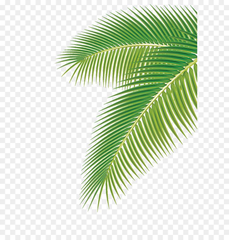 Descarga gratuita de Arecaceae, Dibujo, La Fotografía imágenes PNG