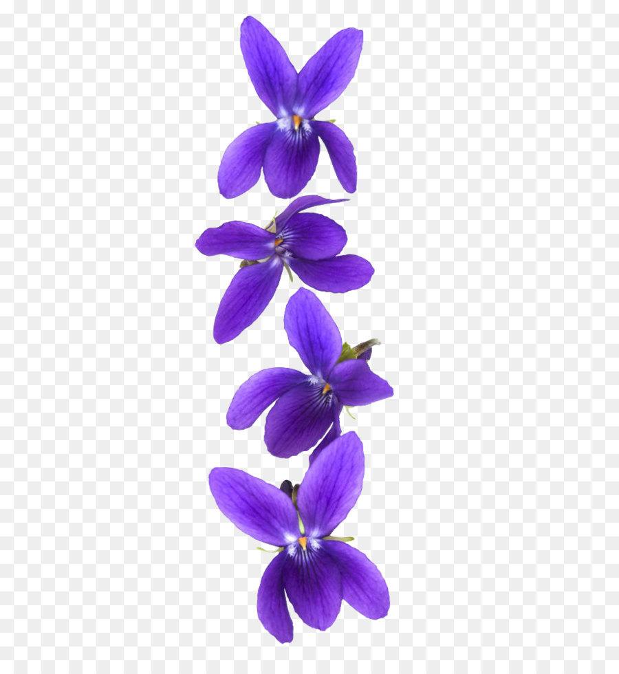 Descarga gratuita de La Luz, Violeta, Flor imágenes PNG