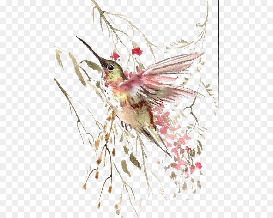 Descarga gratuita de Aves, Colibrí, Vuelo Imágen de Png