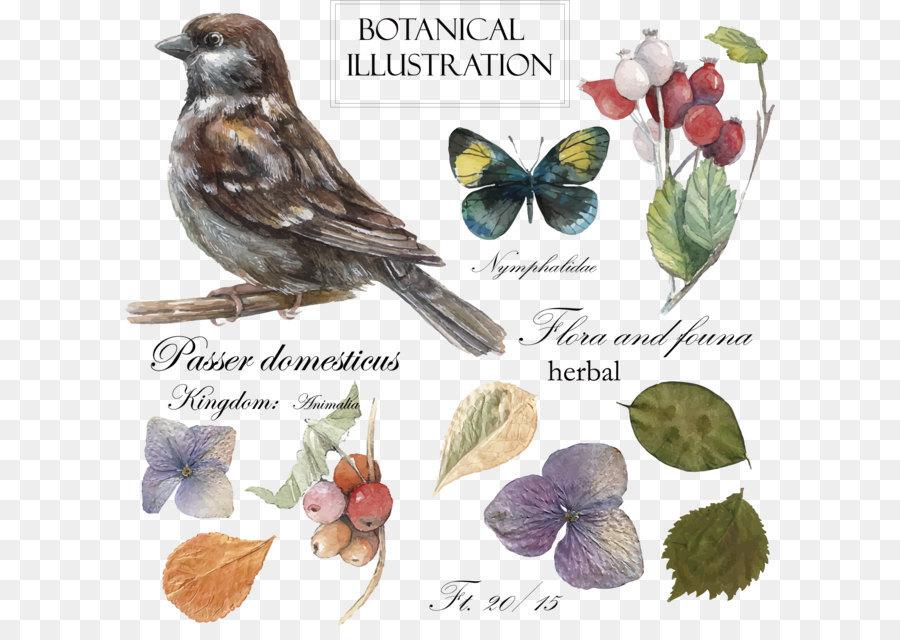 Descarga gratuita de Aves, Aves Y Flores Pintura, Pintura Imágen de Png