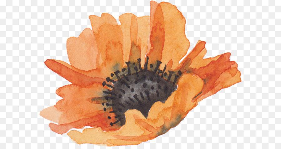 Descarga gratuita de Flor, Naranja, Planta imágenes PNG