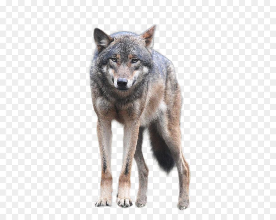Descarga gratuita de Perro, Coyote, La Vida Silvestre Imágen de Png