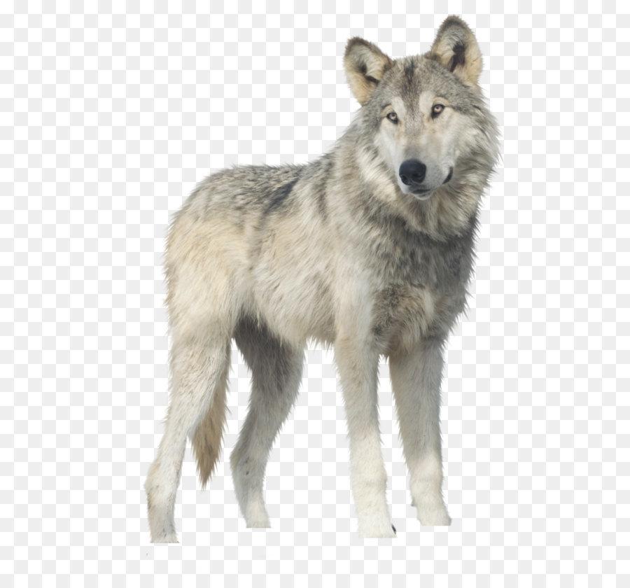 Descarga gratuita de Yukon Lobo, Descargar, Gimp imágenes PNG