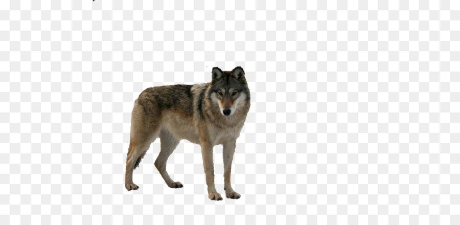 Descarga gratuita de Animal, Paquete De, Lobo imágenes PNG