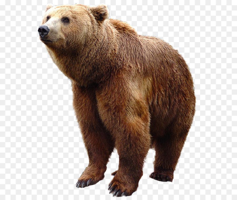 Descarga gratuita de Oso, Grizzly Bear, Carnivora imágenes PNG