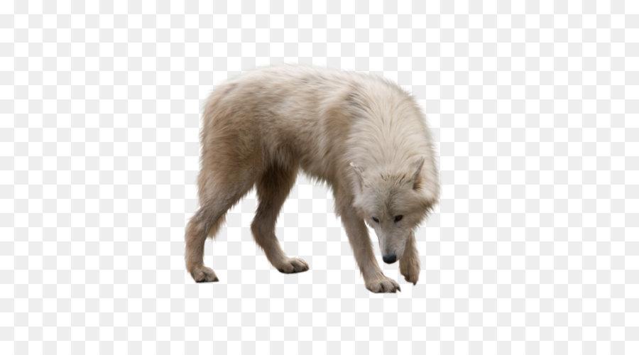 Descarga gratuita de Perro, ártico, Canidae imágenes PNG