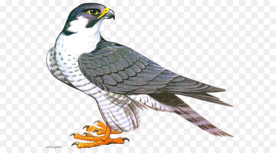 Descarga gratuita de Ford Falcon, Aves, Falcon imágenes PNG