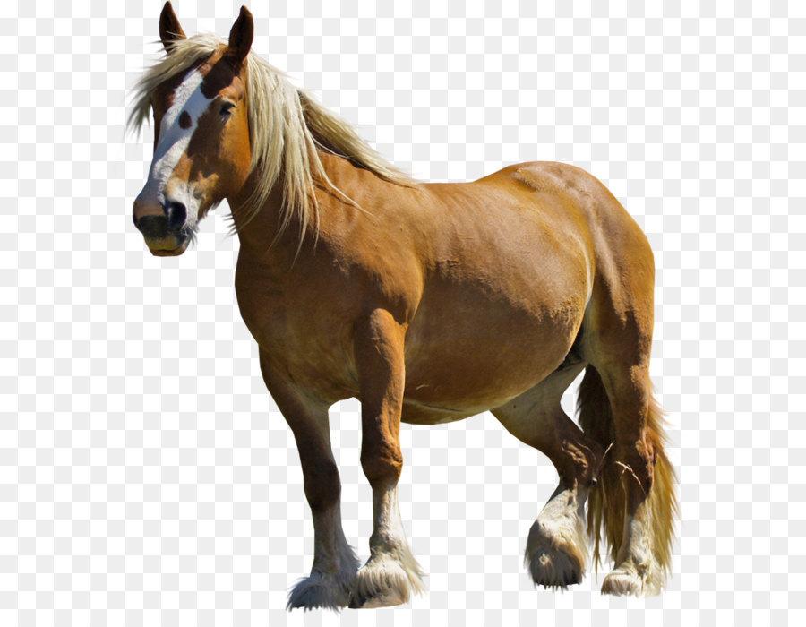 Descarga gratuita de Pony, Negro, Animal Imágen de Png