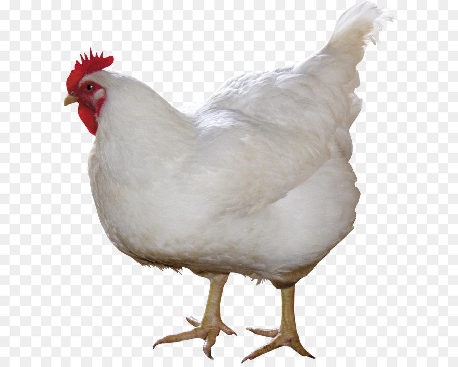 Descarga gratuita de Pollo, Pollo Al Curry, La Comida imágenes PNG