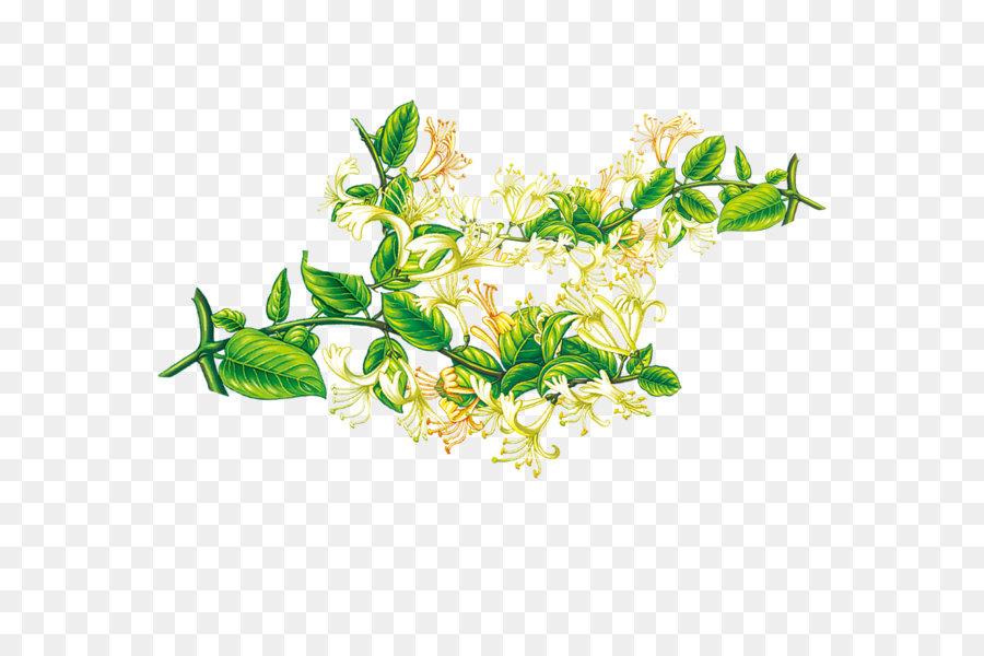 Descarga gratuita de Lonicera Japonica, Flor, Planta imágenes PNG