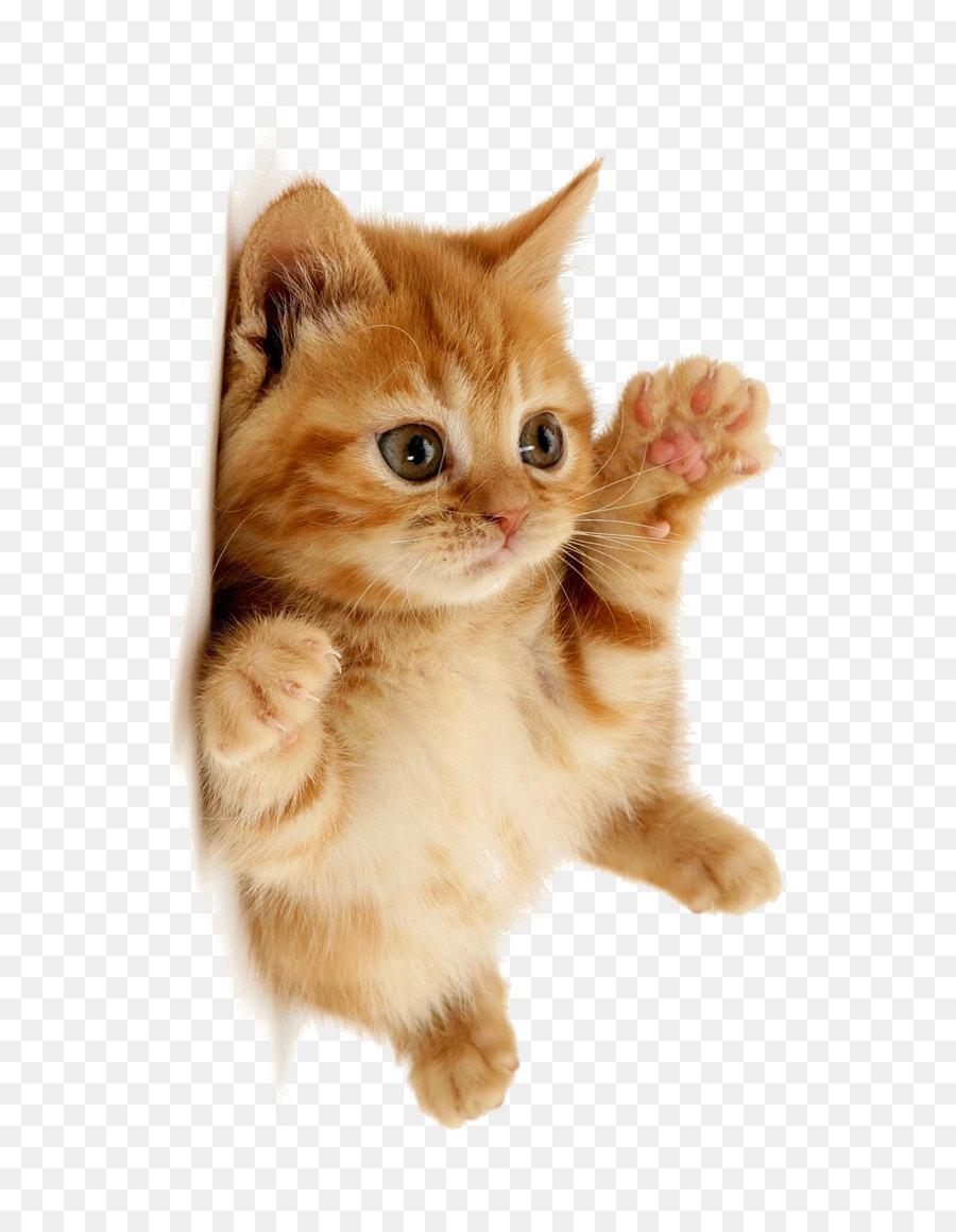 Descarga gratuita de Gatito, Gato, Perro Imágen de Png