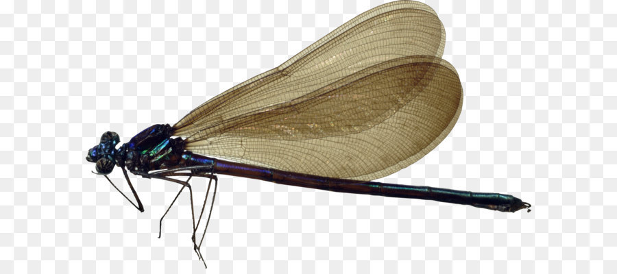 Descarga gratuita de Libélula, Los Insectos, Descargar imágenes PNG