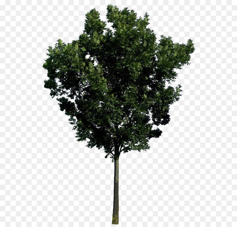 Descarga gratuita de árbol, La Representación, Fotomontaje Imágen de Png