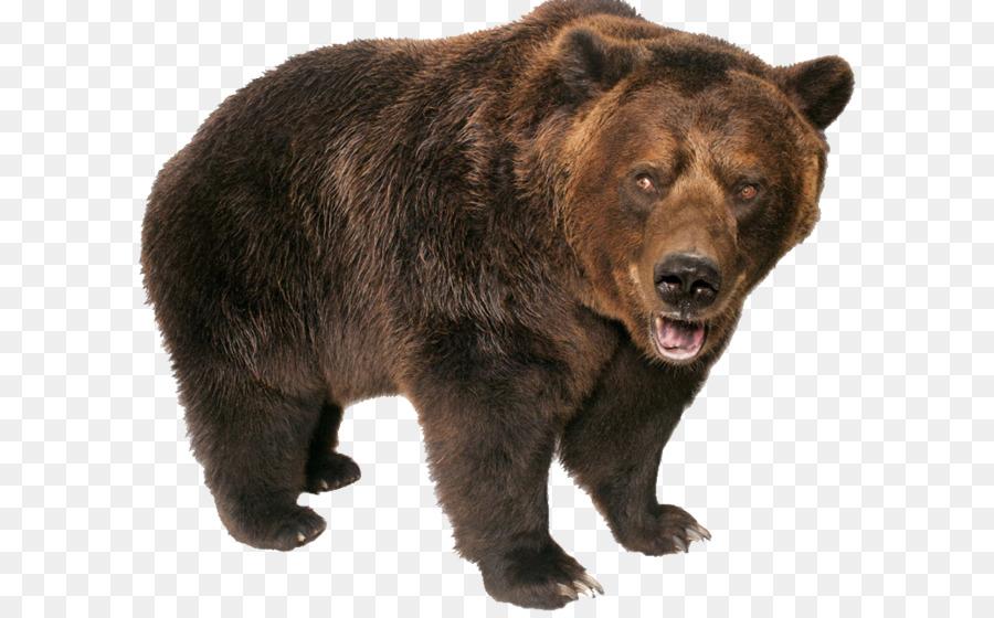 Descarga gratuita de Grizzly Bear, Pizzly, Gruñendo Imágen de Png