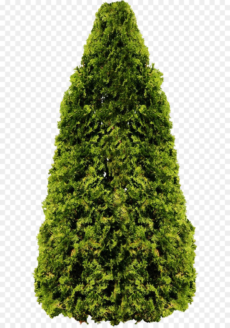 Descarga gratuita de árbol, Abeto, Planta Imágen de Png