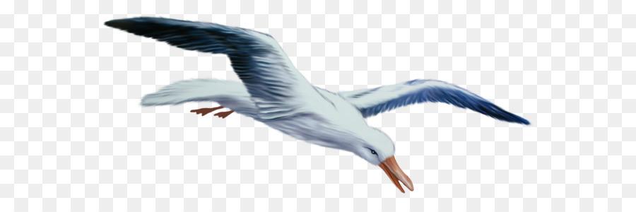 Descarga gratuita de Aves, Descargar, La Fotografía Imágen de Png