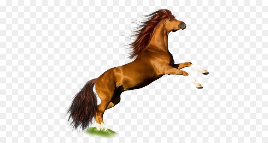 Descarga gratuita de Mustang, Pony, De Raza Pura Imágen de Png