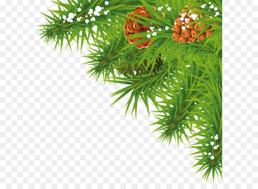 Descarga gratuita de La Navidad, Abeto, Rama Imágen de Png