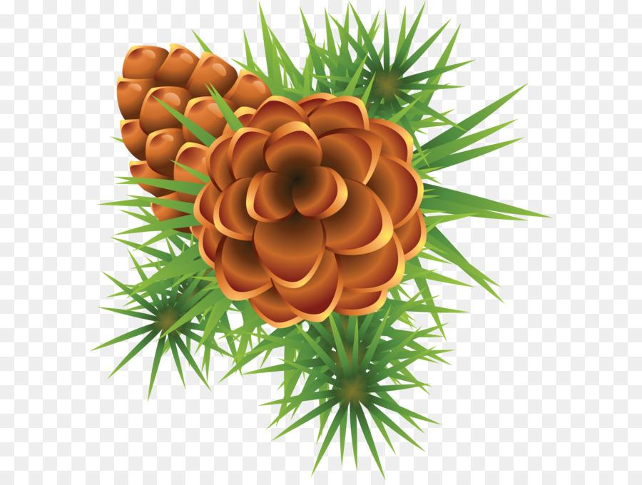 Descarga gratuita de El Muérdago, La Navidad, Phoradendron Tomentosum Imágen de Png