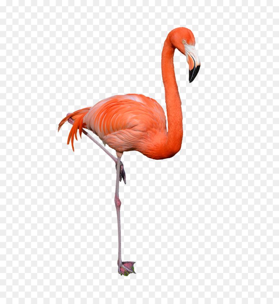 Descarga gratuita de Aves, Flamingo, Hipervínculo imágenes PNG