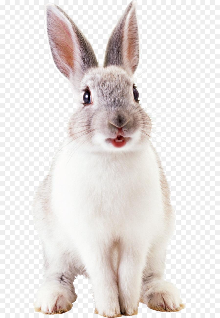 Descarga gratuita de Conejo, La Lindura, Gris imágenes PNG