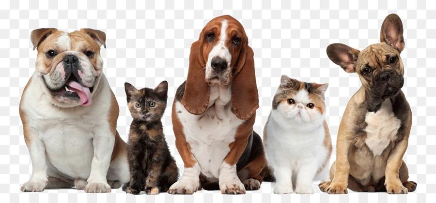 Descarga gratuita de Cuidado De Mascotas, Perro, Gato Imágen de Png