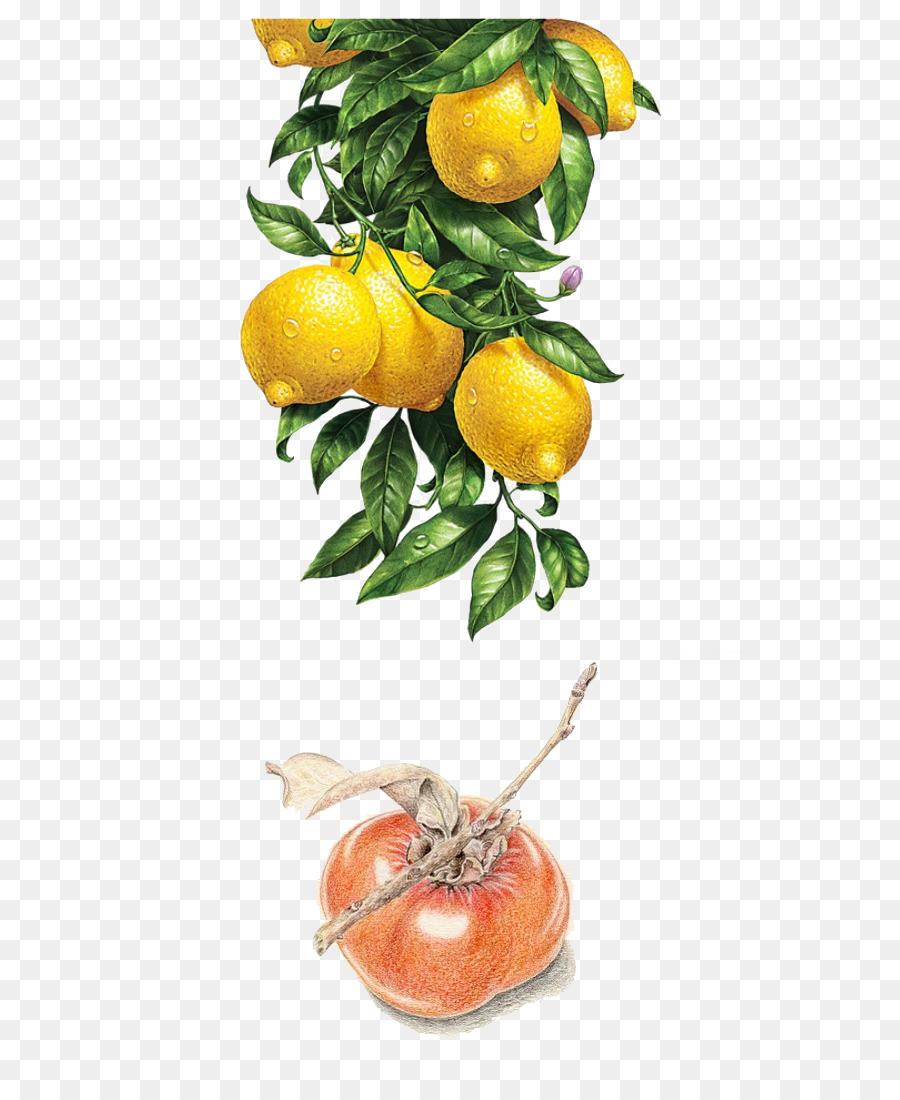 Descarga gratuita de Limón, Pintura A La Acuarela, Pintura Imágen de Png