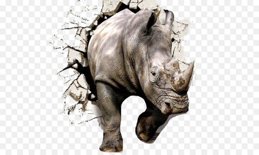 Descarga gratuita de La Pared, Rhinoceros 3d, Papel Imágen de Png