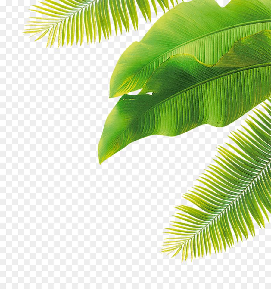 Descarga gratuita de La Fruta, Flor, Coco imágenes PNG
