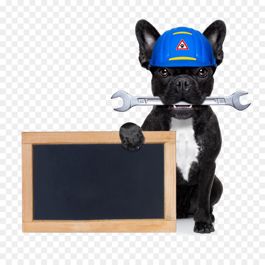 Descarga gratuita de Bulldog Francés, Bulldog, Caniche imágenes PNG