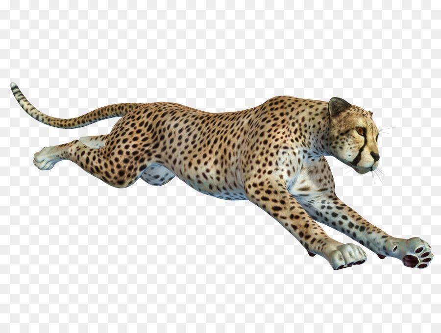 Descarga gratuita de Cheetah, Africano De Leopardo, Remoto De La Cámara imágenes PNG