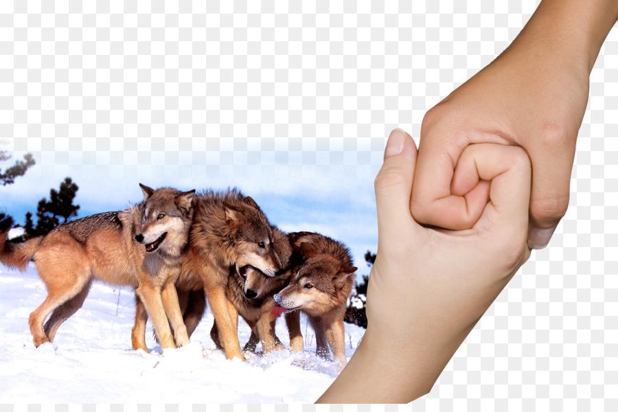 Descarga gratuita de Perro, Lobo Estepario, Dingo Imágen de Png
