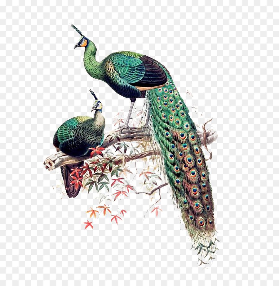 Descarga gratuita de Pavo Real Verde, Asiática Del Pavo Real, Pájaro Imágen de Png