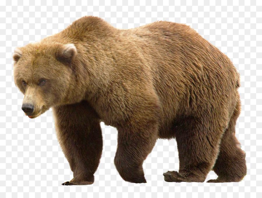 Descarga gratuita de Oso, Grizzly Bear, Postscript Encapsulado Imágen de Png