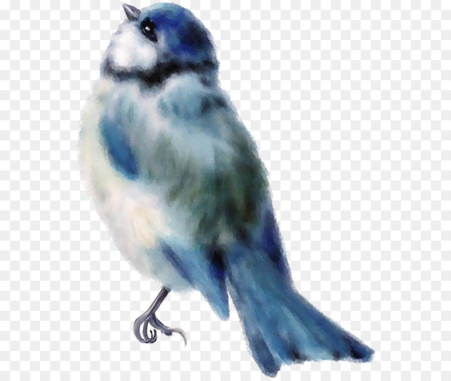 Descarga gratuita de Pájaro, Gorrión, Finch Imágen de Png