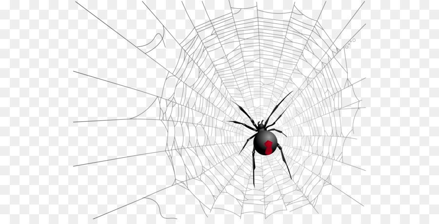 Descarga gratuita de Arañas De La Viuda, Los Insectos, Araña Imágen de Png