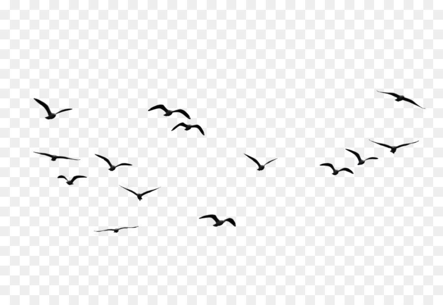 Descarga gratuita de Pájaro, Grey, Las Aves En Vuelo imágenes PNG