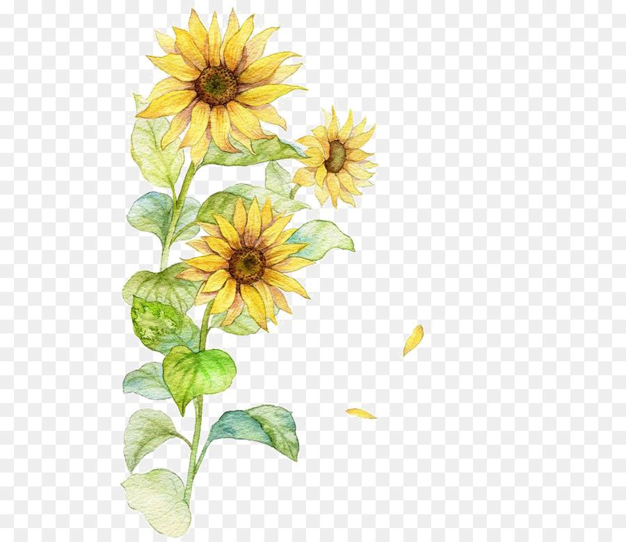 Descarga gratuita de Común De Girasol, Cartel, Flor Imágen de Png