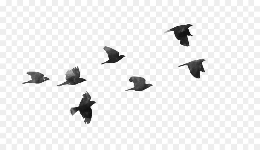 Descarga gratuita de Pájaro, Vuelo, Las Aves En Vuelo Imágen de Png