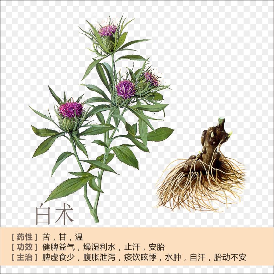 Descarga gratuita de Bai Zhu, Se Lancea, Rizoma imágenes PNG