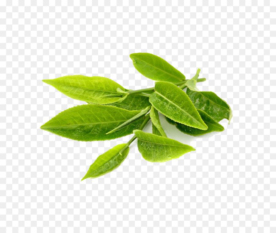 Descarga gratuita de Té, Té Verde, Hoja Imágen de Png