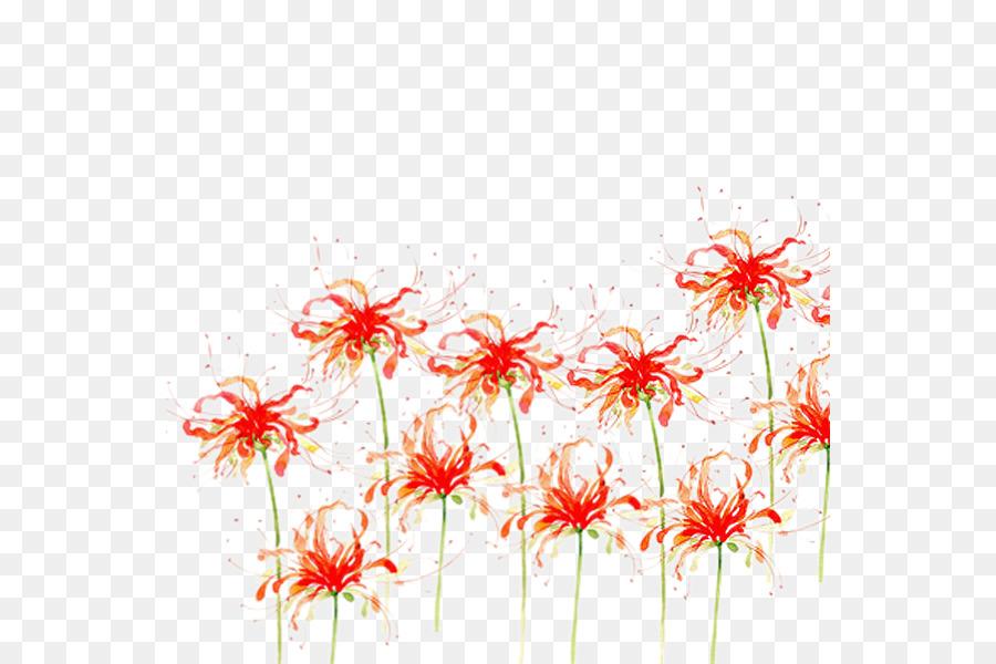 Descarga gratuita de Flor, Descargar, Araña Roja Lily Imágen de Png