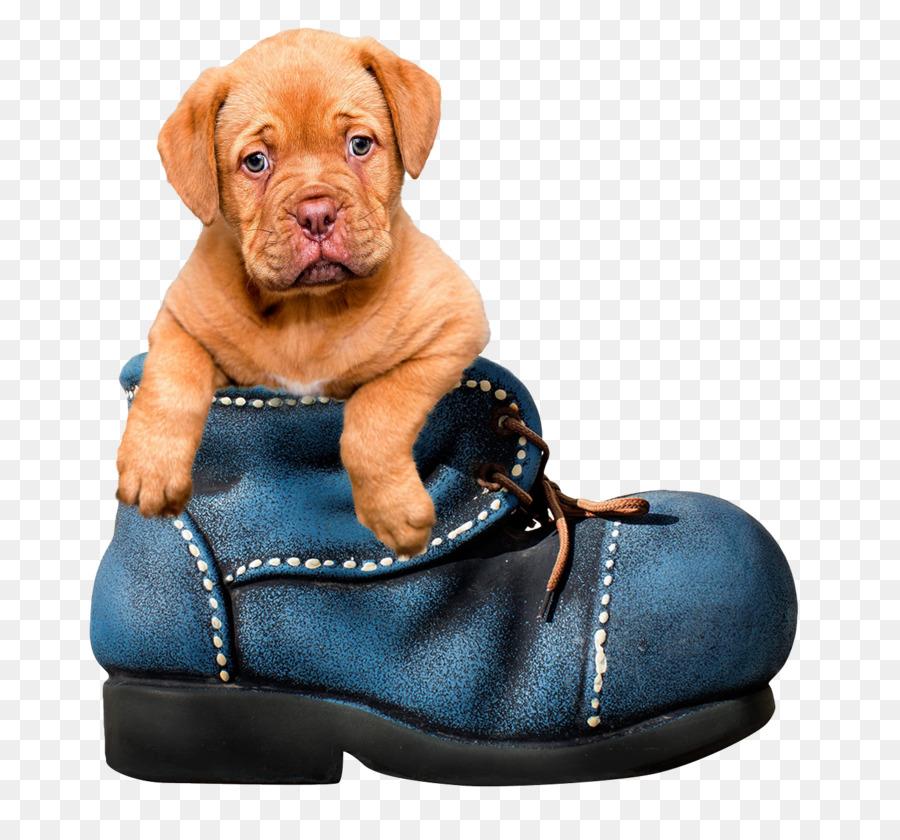 Descarga gratuita de Dogo De Burdeos, A La Boloñesa Perro, Yorkshire Terrier imágenes PNG