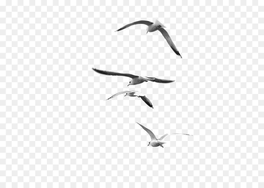 Descarga gratuita de La Fotografía, En Blanco Y Negro, La Fotografía De La Naturaleza Imágen de Png